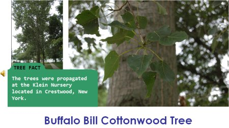 BuffaloBillCottonwood.jpg