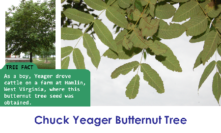 Chuck Yeager Butternut_thumb.png