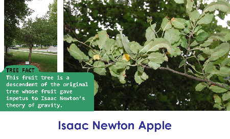 Isaac Newton Apple_thumb.png