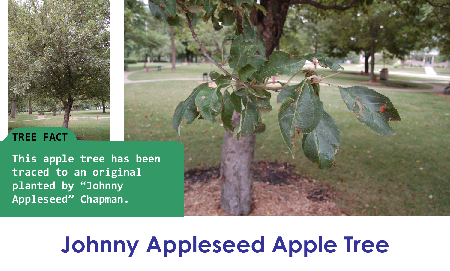 Johnny Appleseed Apple Tree_thumb.png
