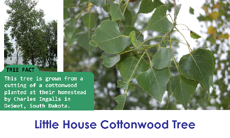 Little House Cottonwood_thumb.png