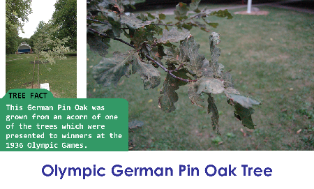 Olympic German Pin Oak_thumb.png