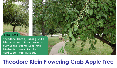 Theodore Klein Flowering Crab Apple_thumb.png