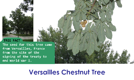 Versailles Chestnut_thumb.png