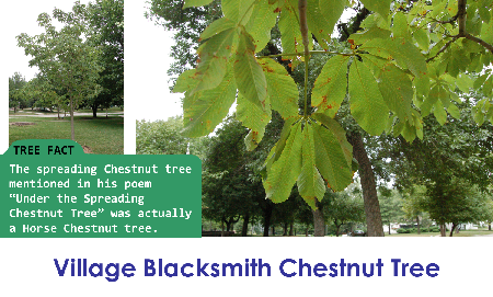 Village Blacksmith Chestnut Tree_thumb.png
