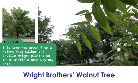 Wright Brothers' Walnut_thumb.png