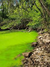 Eutrophication.jpg